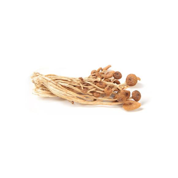 海南茶树菇
