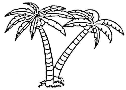 椰子树简笔画,哪里有卖椰子树简笔画
